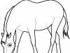 horse-eating-grass-coloring-page-gif